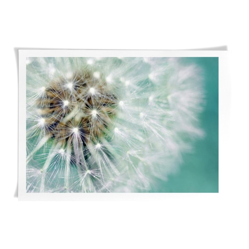 Dandelion seeds photography - Canvas Art Print Wall Deco art
