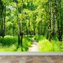 Wall Mural Birch Forest in...